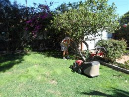 Garden grass cutting