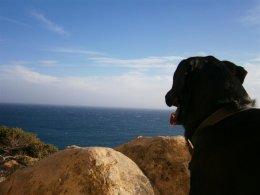 One man and his dog at Trafalgar point